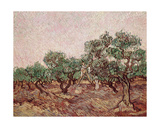 The Olive Pickers  1888-89