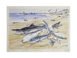 Several Sharks on the Beach at Angra Peguena  Namibia  1864