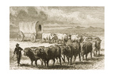 A Bullock Wagon Crossing the Great Plains Between St Louis and Denver  C1870  from 'American…