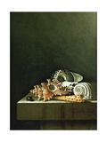 A Still Life of Shells  1698