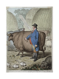 Fat Cattle  Published by Hannah Humphrey in 1802