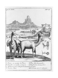 Llamas and Diagrams Concerning Mineral Extraction  from 'Relation Du Voyage De La Mer Du Sud Aux…