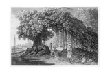 A Banyan Tree  from 'travels in India in In the Years 1780-83' by William Hodges  Engraved by…