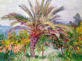 Palm Tree at Bordighera  C1884