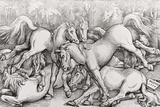 Group of Seven Wild Horses  1534