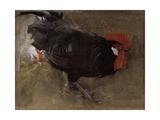 The Black Cock