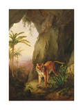 Tiger in a Cave  C1814