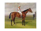 'Isinglass'  Winner of the 1893 Derby  1893 (Detail)