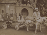 Horse-Drawn Cart  Cairo  1893
