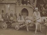 Horse-Drawn Cart  Cairo  1893