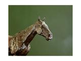 Horse's Head (Detail)