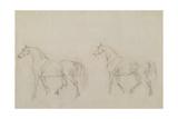 Two Horses Walking Left
