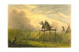 Guarding the Corn Fields  1853