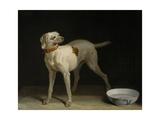 Dog  1751
