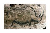Rhinoceros  Upper Paleolithic
