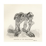 Skeleton of the Megatherium  from 'Journal of Researches' by Charles Darwin (1809-82) Published…