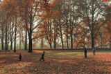 Children Playing under Huge Chenar Trees in Autumn  Nishat Bagh  Srinagar