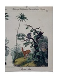 Educational Poster Featuring Flora and Fauna of South America  Right Side  Published by F…