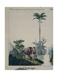 Educational Poster Featuring Flora and Fauna of South America  Left Side  Published by F…