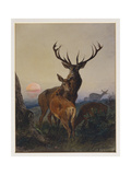 A Stag with Deer in a Wooded Landscape at Sunset  1865