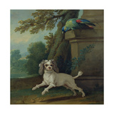Zaza  the Dog  C1730