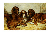 Shot and His Friends - Three Irish Red and White Setters  1876