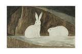 Arctic Hares  C1829-33