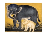 Elephant and Calf  Page from a Manuscript on Elephant Training