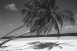 Palm Tree Shadow on Sand
