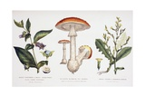 Common Poisonous Plants  C1890