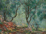 Olive Trees in the Moreno Garden  1884