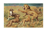 Rhodesian Ridgebacks Corral a Lion for a Hunter