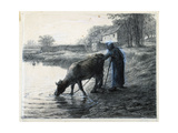 Woman Leading Her Cow to Water