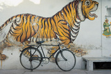 Bicycle at Wall Painting of Tiger   Udaipur  Rajasthan  India