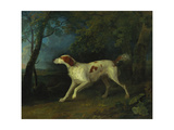 A Brown and White Setter in a Wooded Landscape  1773