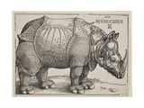 The Rhinoceros  1515