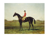 A Racehorse with Jockey Up on the Racetrack at Newmarket
