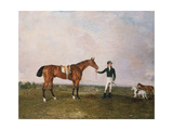 Zinganee' Held by Sam Chifney Jr at Newmarket  1829