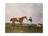 Zinganee' Held by Sam Chifney Jr at Newmarket  1829