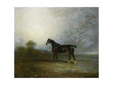Bembo  a Favourite Hunter of Charles Shuttleworth  Esq  1802