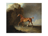 A Golden Chestnut Racehorse by a Rock Formation  1800