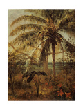 Palm Tree  Nassau  1892