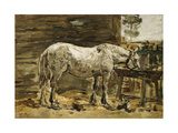 White Horse at the Drinking Trough  C1885-90