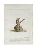 A Woman Dancer of the Island of Maui  1819
