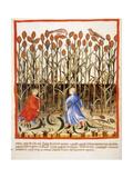 Tacuinum Sanitatis Late 14th Century Farmers Gathering African Millet Miniatura