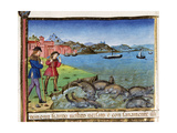 Pigs are Thrown into the Sea and Drown Codex of Predis (1476) Italy