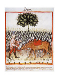 Tacuinum Sanitatis Late 14th Century Man with Horse in a Field of Spelt Miniature