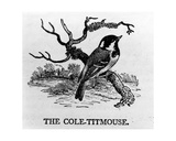 The Cole-Titmouse  Illustration from 'The History of British Birds' by Thomas Bewick  First…