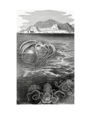 The Paper Nautilus (Argonauta) and the Octopus  1881