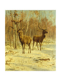 Two Stags in a Clearing in Winter